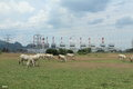 Cow and power station Royalty Free Stock Photo