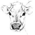 Cow sketch. Dairy cow pencil sketch. Royalty Free Stock Photo