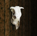 Cow Skull Royalty Free Stock Photography