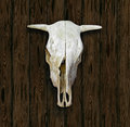 Cow Skull Royalty Free Stock Photos