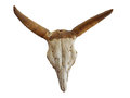 Cow skull with mystic symbol Royalty Free Stock Photo