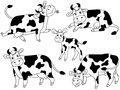 Cow Vector Set Royalty Free Stock Photo