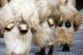 Cowbells on kurents at shrovetide Royalty Free Stock Image