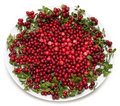 Cowberry on plate Stock Images