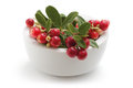 Cowberry in white bowl Royalty Free Stock Photo
