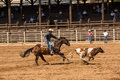 A cowboy and his horse chasing calf at rodeo roping competition in deadwood south dakota Stock Photography