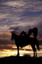 Cowboy on horse swinging rope a is sitting a in the sunset a Royalty Free Stock Photo