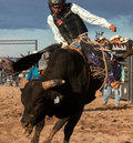 Cowboy Rodeo Bull Riding Royalty Free Stock Photo