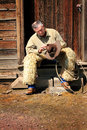 Cowboy on stoop a typical unshaven wearing antique woolly angora chaps sitting in the door of an old weathered clap board porch Royalty Free Stock Images