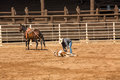 Cowboy ties his calf at rodeo in south dakota a off a roping competition deadwood Royalty Free Stock Photography