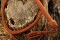 Cowboy whip curled around tree trunk Stockbilder