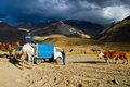 Cowboys the andes cajon del maipo in y embalse el yeso reservoir chile Royalty Free Stock Photos