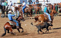 Cowboys Roping Calf Royalty Free Stock Photos