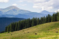 Cows on meadow with mountains range and blue cloudy sky background Royalty Free Stock Photo