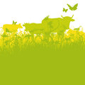 Cows on pasture green and mountain holiday Royalty Free Stock Images