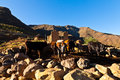Cows in a stabble in a mountain village Stock Image