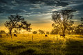 Cows at the sunset Royalty Free Stock Photo