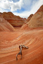 Coyote Buttes North Royalty Free Stock Photos