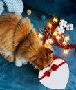 A cozy photo with a red cat sniffing a heart-shaped gift box
