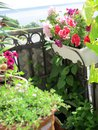 Cozy small garden on the balcony with blooming petunias. Beautiful greening design
