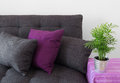 Cozy sofa with cushions and green plant decorated in metal pot Royalty Free Stock Photography