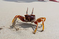 Crab in awesome position in sand thailand Stock Photography