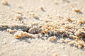 Crab on the beach ghost is digging excavation for evasion Royalty Free Stock Photo