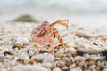 Crab on the beach red Royalty Free Stock Image