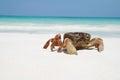 Krab na pláž thajsko