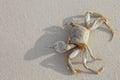 Crab on beach Royalty Free Stock Photo