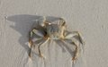 Crab on beach a white sand Royalty Free Stock Photography