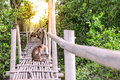 Crab eating macaque monkey gaping on bamboo bridge in mangrove forest Stock Photography