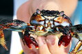 Crab in the hand gran canaria Royalty Free Stock Photos