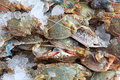 Crab heap are bind with ice for keep fresh Royalty Free Stock Photography