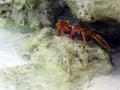 Crab hiding Stock Photo