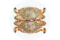 Crab horse crab in isolate on white plate Royalty Free Stock Images
