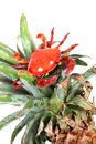 Crab On Pineapple