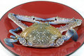 Crab on red dish Closeup Royalty Free Stock Photography