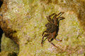 Crab on the rock Royalty Free Stock Photo