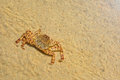Crab on sand in water top view Stock Images