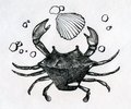 Crab shell and some peebles little single small on the sea shore ink drawn sketch Royalty Free Stock Images