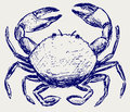 Crab sketch Stock Photography