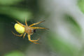 Crab spider the close up of yellow Stock Photo
