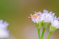 Crab spider in green nature or garden Stock Image