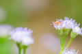 Crab spider in green nature or garden Stock Photos