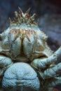 Crab swimming in a tank at the aquarium Stock Photo