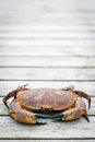 Crab on the weathered wooden terrace with copy space above it Royalty Free Stock Photos
