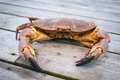 Crab on the wooden terrace weathered Stock Photography