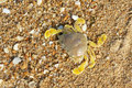 Crab the yellow on sandy beach Royalty Free Stock Photos