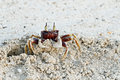 Crabe d'ordinateur de secours sur la plage Photo stock